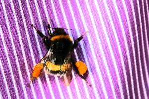 khe.insekten.2015-09