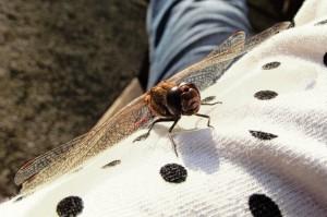khe.insekten.2015-03